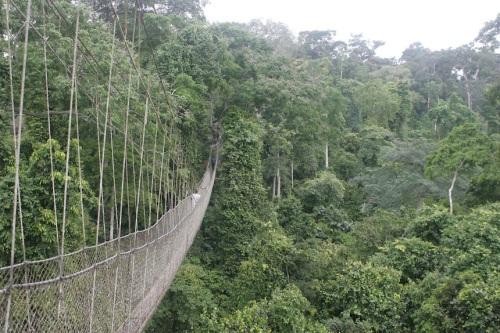 ghana kakhum canopy