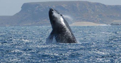 eq annobon whales