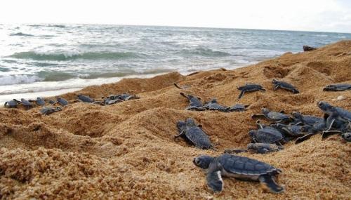 guinea island turtles 2