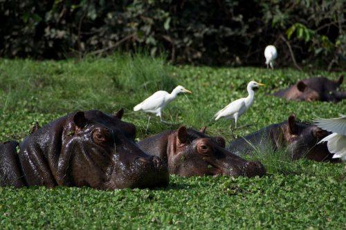 guinea Orango-Island-1024x683