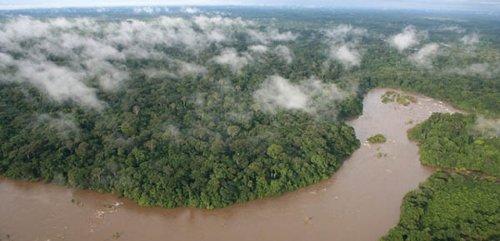 sierra gola rain forest