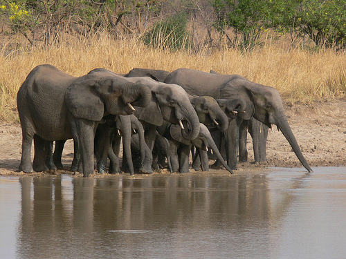 togo fazao elephants