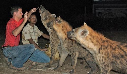 ethi harar hyenas