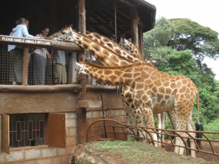 ken giraffe center 3