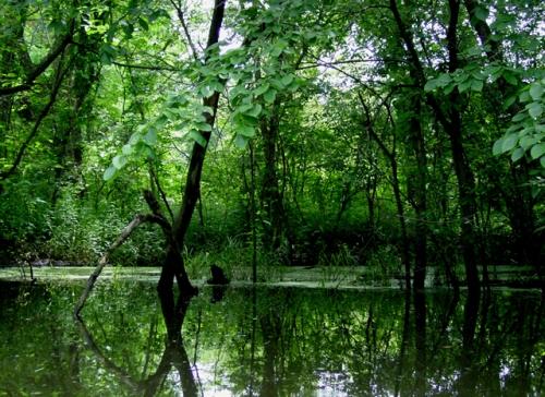 rwanda gishwati-forest-reserve