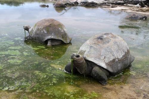 sey aldabra 2