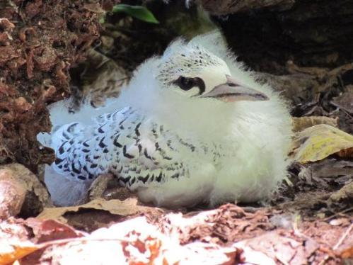 sey arid bird
