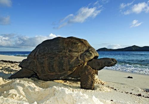 sey cousine tortoise