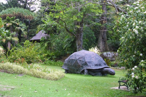 sey national botanical tortoise