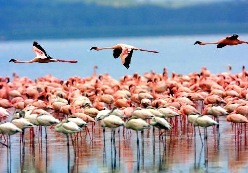 tan lake manyara 2