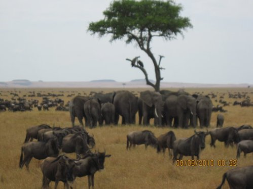 tan serengeti-national-park