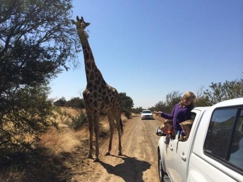 blo naval giraffe