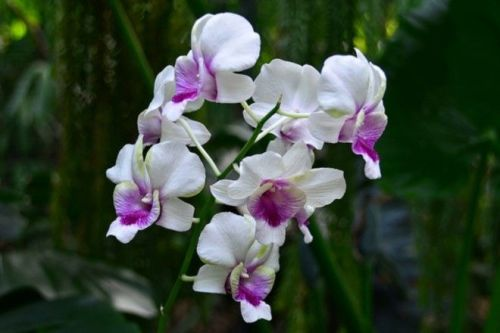 blo orchid house 2