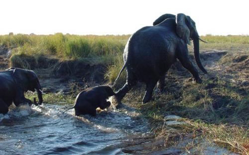 bot kasane chobe river