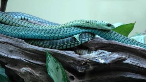 bot kasane snake park