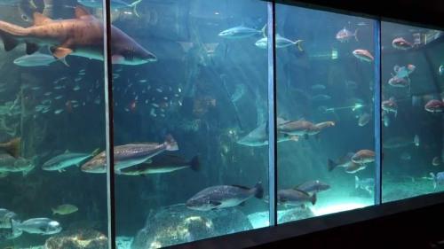 cape aquarium