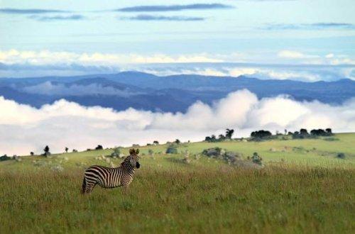 mal nyika-national-park-zebra-malawi-590x390