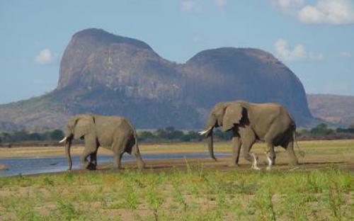 moza Niassa Game Reserve 1