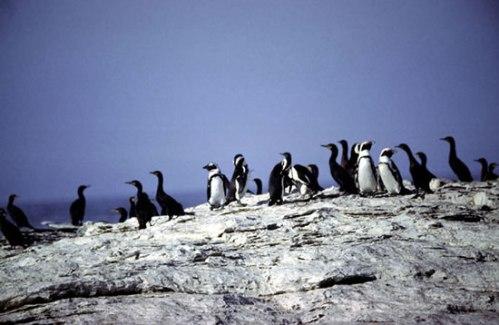 nam penguin