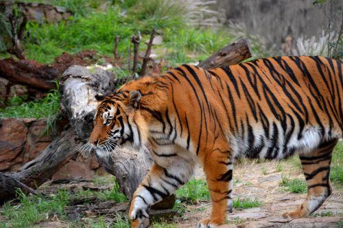 pret zoo 4