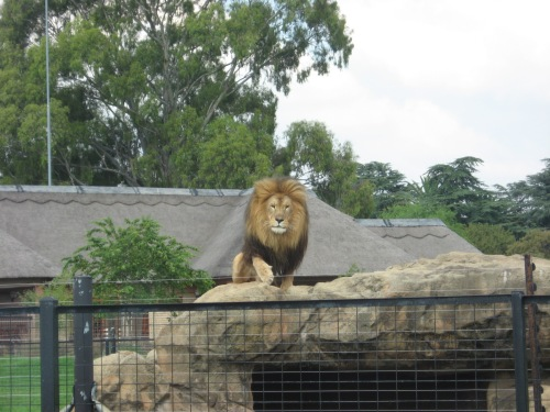 south africa zoo