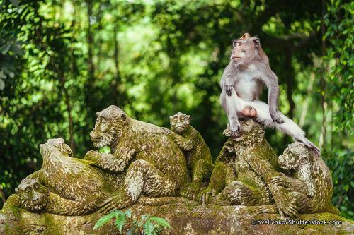 bali ubud-monkey-forest-in-bali
