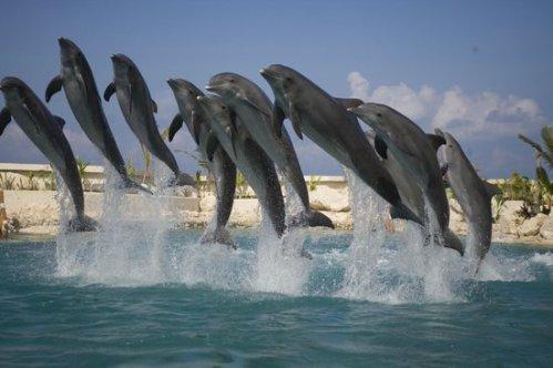 coz dolphin 2