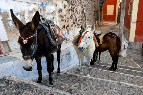 san fira mules