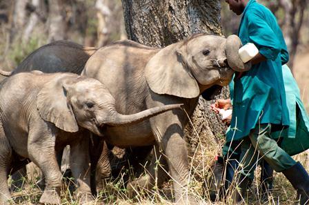 zam elephants