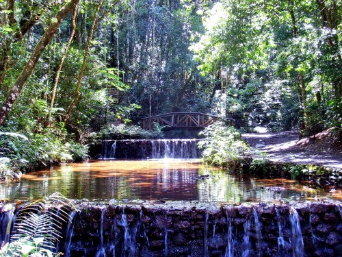 belo parque das mango