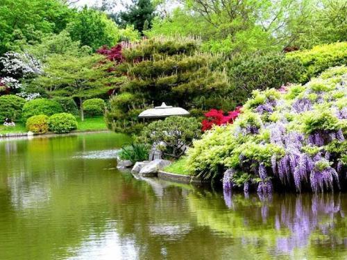 buenos japanese-garden-buenos-aires3
