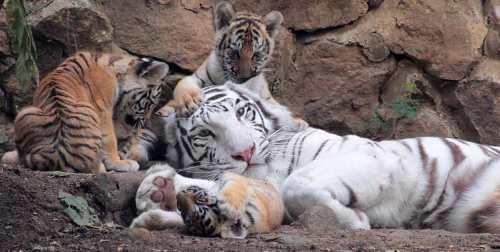 cali zoo 3
