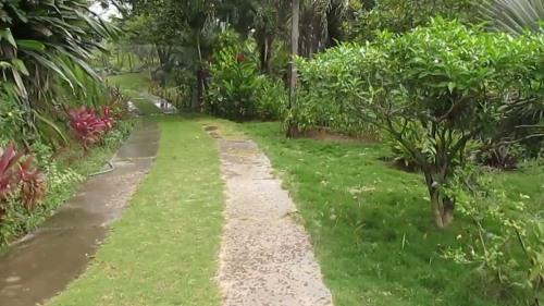 ecuador botanico