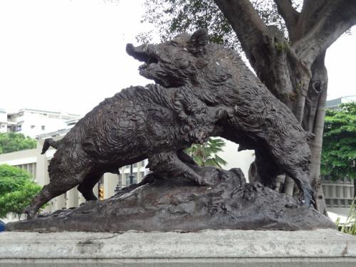 ecuador iguanas boars