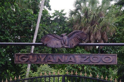 guy zoo