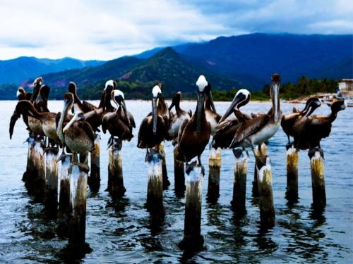 venez mochima birds