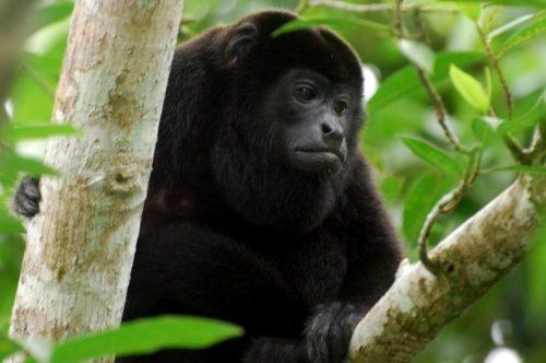 belize monkey-river-belize-tour-1024x680