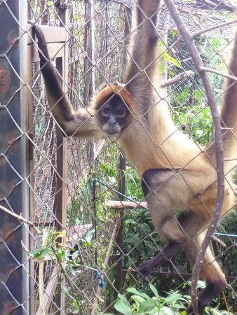 costa refugio monkey