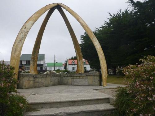 falk whalebone 2