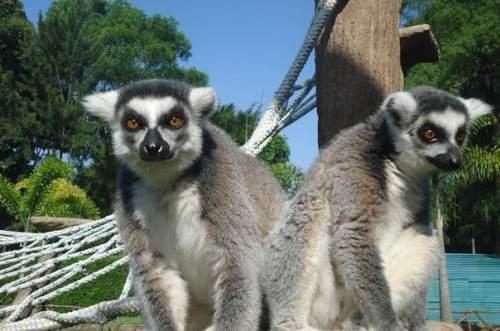 guat zoo 3