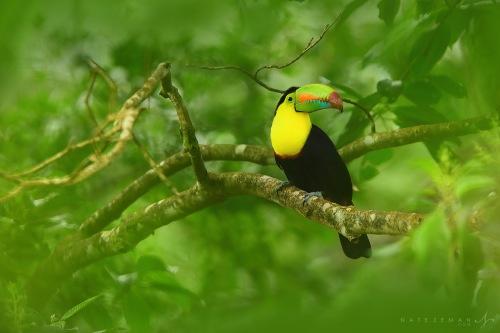 rica arenal toucan
