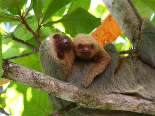 rica Manuel-Antonio-National-Park-Tour3