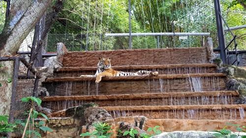 tri port zoo