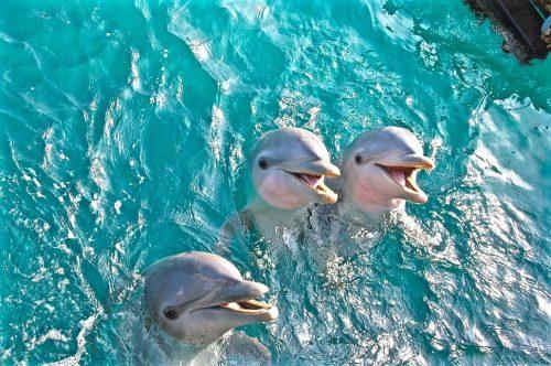 bahamas blue lagoon dolphins