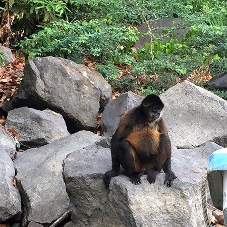 nic monkey