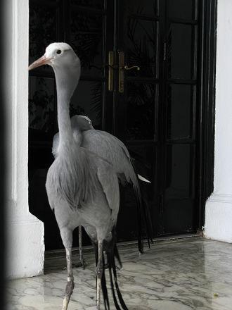 pan palacio heron