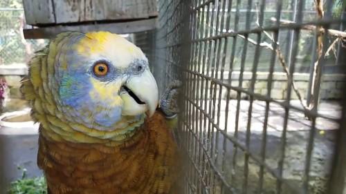 gren botanical parrot