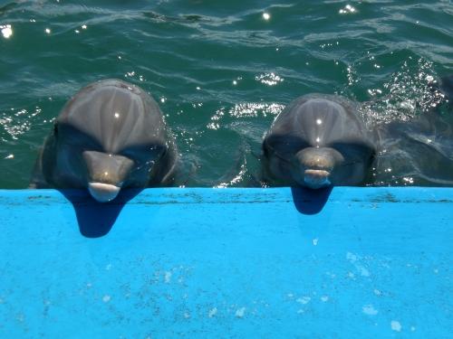 cuba guardo dolphins