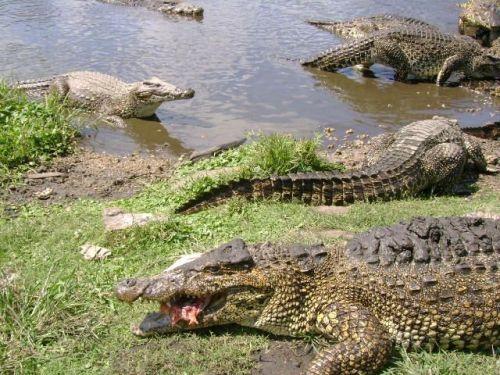 cuba zapata montemar crocs