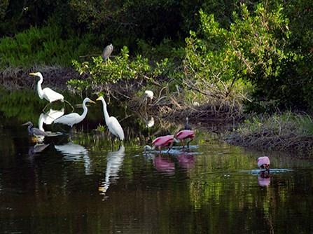 ever flamingo eco